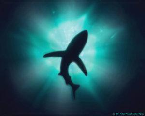 agency leaders need to shark